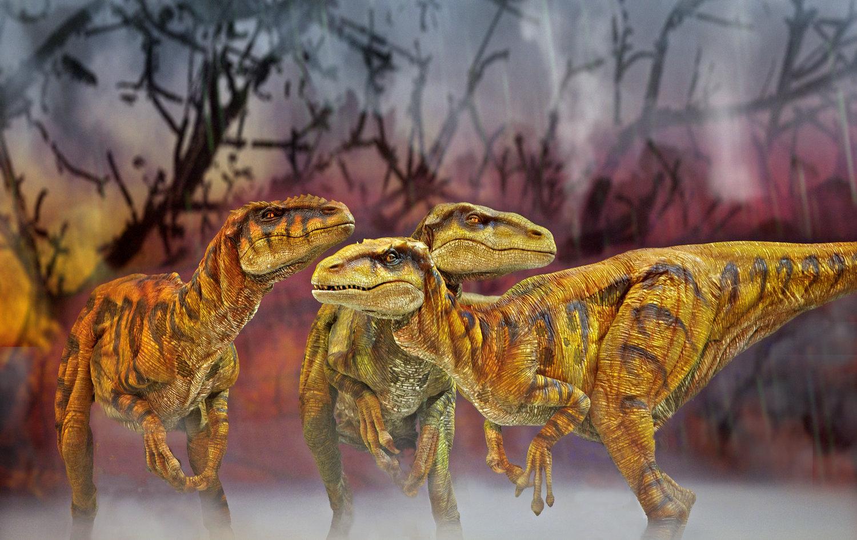 <em>Utahraptors</em> par Creature Te<em>c</em>hnology Co. (West Melbourne, Vi<em>c</em>toria, Australie), dans Walking with Dinosaurs – The Arena Spe<em>c</em>ta<em>c</em>ular, dire<em>c</em>teur <em>c</em>réatif : Sonny Tilders. Photo: David Scheinmann