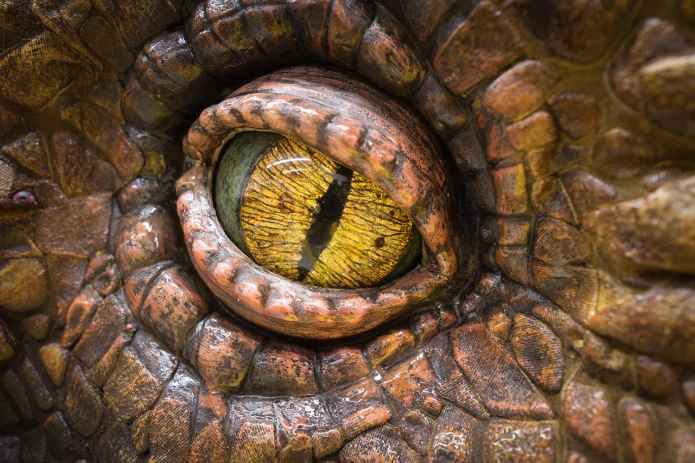L'oeil de l'Allosaure par Creature Te<em>c</em>hnology Co. (West Melbourne, Vi<em>c</em>toria, Australie). Photo: Niklas Passmann