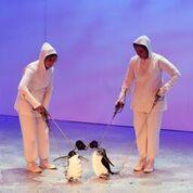 Antarctica (première : 2016, Theatre Royal, Hobart, Tasmanie, Australie), directeur des marionnettes : Peter J. Wilson.